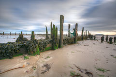 Groynes at Low tide 1 Royalty Free Stock Photos