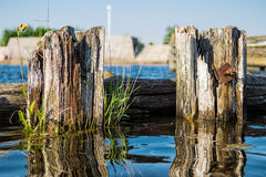 Groynes on the river Warnow Royalty Free Stock Photos