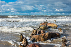 Groynes on shore of the Baltic Sea Stock Images