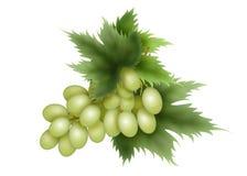 Grozdb sol- som är grön, efterrätt, druvor Arkivbild