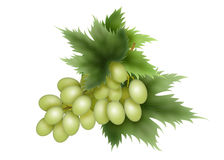 Grozdb, solar, green, dessert, grapes Stock Photography