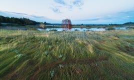 Grren gräslandskap Fotografering för Bildbyråer