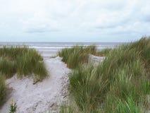 Gräs- dyn på Ameland Royaltyfria Bilder