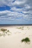 Gräs i sand på det baltiska havet Arkivfoto