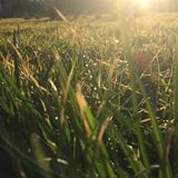 Gräs i sunen Arkivbilder