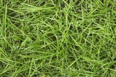 Gräs med pärlor Royaltyfri Bild