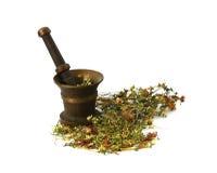 gräs växt- medicinal svartkonst Royaltyfri Fotografi