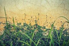 Gräsäckel på den gamla väggen Arkivfoto