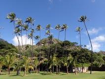 Gräsfältet, kokosnöten och andra träd parkerar in med Diamondhead C Arkivfoto