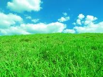 gräsgreen Arkivbilder