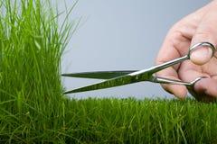 gräsgräsklippningsmaskin Royaltyfria Bilder
