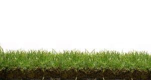 gräslawn Arkivbilder
