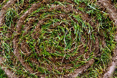 Gräsrulle Arkivfoto