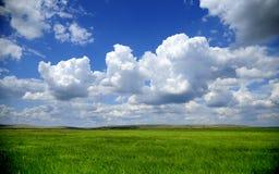grässlätt Arkivfoto