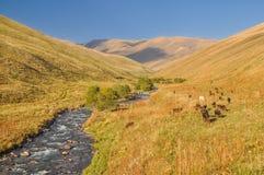 Grässlättar i Kirgizistan Arkivfoto