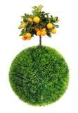 Grässphere och tree Arkivfoton