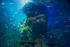 gr tes aquarium in der welt atlanta georgia lizenzfreie stockfotografie bild 16709557. Black Bedroom Furniture Sets. Home Design Ideas