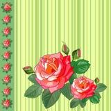 Gruß-Karte mit Rosen und Streifen Lizenzfreie Stockfotos