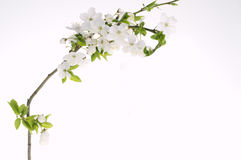 Grußfeiertagskarte mit blühenden Blumen Lizenzfreie Stockbilder