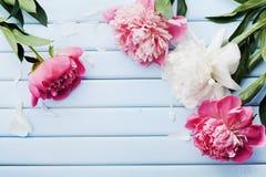Grußkarte für Mutter- oder Frauentag der schönen rosa und weißen Pfingstrose blüht auf blauer Weinlesetabelle von oben genanntem  Stockbild