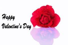 Grußkarte für Valentine& x27; s-Tag mit einer roten Rose Stockfotos