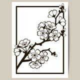 Grußkarte mit einer Niederlassung von Kirschblüten Stockbild
