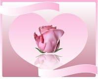Grußkarte mit einer Rose Stockbilder