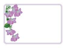 Grußkarte mit hellrosa Petunien lizenzfreie abbildung
