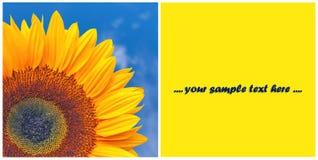 Grußkarte mit Sonnenblume Lizenzfreie Stockbilder