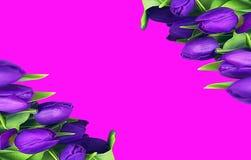 Grußkarte mit Tulpen auf dem rosa Hintergrund für den Feiertag, Galaeinladung, die Abstraktion von Farben Stockbild