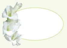 Grußkarte mit weißer Gladiole Vektor Abbildung