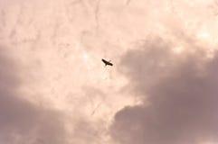 Gru in cielo Immagini Stock