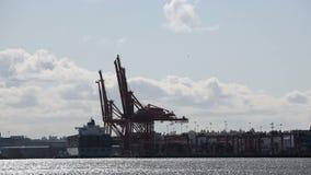 Gru del porto del contenitore stock footage