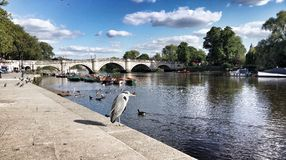 Gru a Richmond Riverside Fotografia Stock