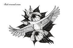 gru Rosso-incoronata con il tatuaggio dell'ibisco che disegna a mano illustrazione di stock