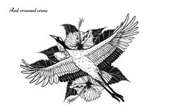 gru Rosso-incoronata con il tatuaggio dell'ibisco che disegna a mano royalty illustrazione gratis