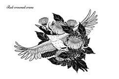 gru Rosso-incoronata con il vettore del crisantemo che disegna a mano royalty illustrazione gratis