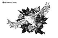 gru Rosso-incoronata con il vettore del crisantemo che disegna a mano illustrazione vettoriale
