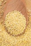 Gruaux de millet Image stock