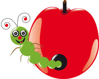 Grub. A grub in a red apple Stock Images