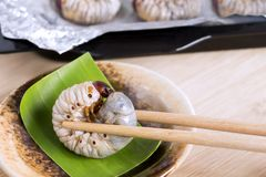 Grub Worms or Coconut Rhinoceros Beetle. Insects food for eating larvae fried or baked on plate with chopsticks and on baking tray. It is good source of stock photography