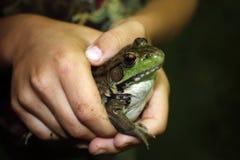 gruba żaba Fotografia Stock