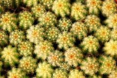 gruba roślina obrazy royalty free