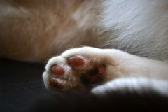 Grubby Fluffy Paw. Tiny yet-to-be-cleaned paw Stock Photography