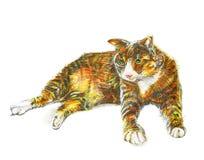 Grubego kota śliczna ręka klamerkę rysowałam ołówkowa tekstura odizolowywa na bielu Fotografia Royalty Free