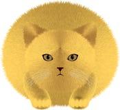 Gruby kot z kostrzewiastym puszystym włosy ilustracji