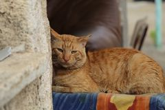 Gruby kota obsiadanie na krawędzi leżanki Obraz Royalty Free