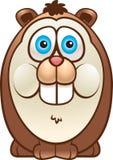 gruby królik doświadczalny Zdjęcie Stock