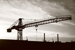 Grue Photo stock
