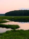Grue blanche au coucher du soleil Image libre de droits
